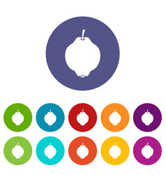 Quince fruit set icons vector