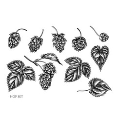 Set hand drawn black and white hop vector