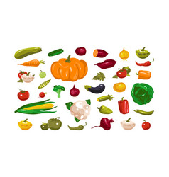stock vegetables vector image