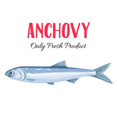 anchovy vector image