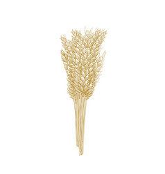 Bunch wheat ears isolated on white background vector