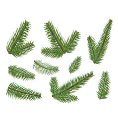 different christmas tree branches set christmas vector image