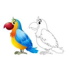 doodle animal for parrot macaw vector image