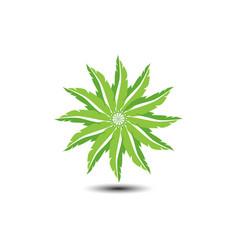 green leaf shape star logo vector image
