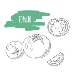 Hand drawn tomato isolated on white vector