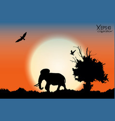 Orange sunrise in the jungle with old tree birds vector