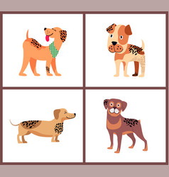 Pedigree dogs with unusual fur color and spots vector