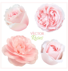 roses set vector image vector image