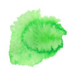 Green watercolor spot vector image vector image