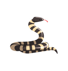 California king snake with black and white bands vector