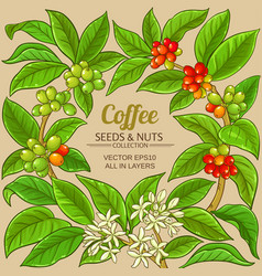 Coffee branches frame on color background vector