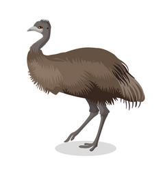 Emu bird full length portrait isolated on white vector