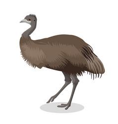 Emu bird full length portrait isolated on white vector