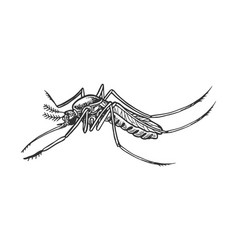 Mosquito insect engraving vector