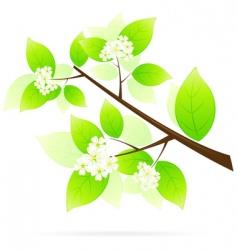 tree branch icon vector image