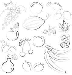 hand drawn fruit sketch vector image vector image