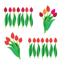 tulips bouquet vector image vector image