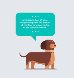 cute dog with chat bubble speech furry human vector image