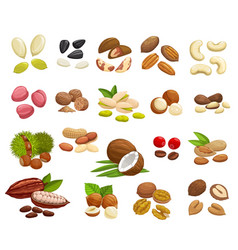 Nuts beans and seeds super food vector