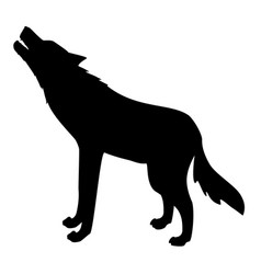silhouette wild wolf vector image