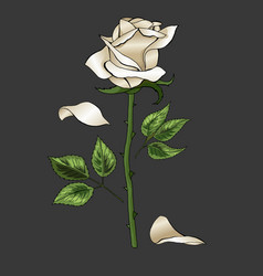 White rose elegant single flower on dark gray vector