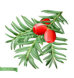 yew branch christmas decoration taxus tree 3d vector image