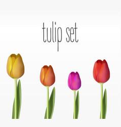 realistic tulips set vector image