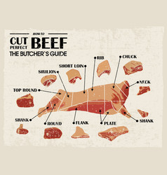 vintage poster butcher diagram and scheme - cow vector image