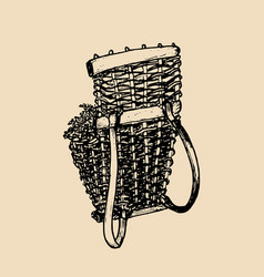 grape basket vintage drawing vector image