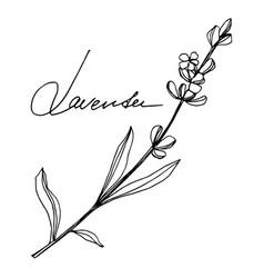 Lavender floral botanical flowers black vector