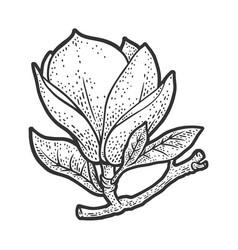 magnolia flower sketch vector image