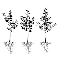 Seedling young fruit trees with roots set vector