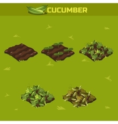 SET 3 Isometric Stage of growth Cucumber vector