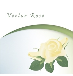 Template card with yellow roses vector