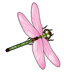Cartoon dragonfly with pink wings isolated on vector