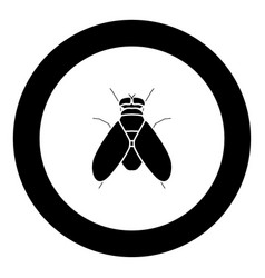 fly black icon in circle vector image