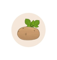 Icon Potato Vegetable vector image