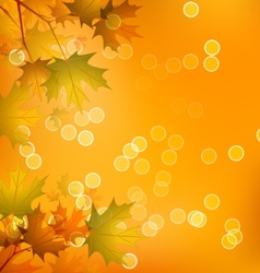 Maple leaves of autumn vector