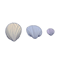 set three seashells in a line hand drawn vector image
