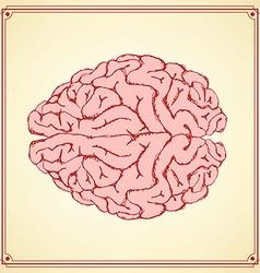 Sketch human brain in vintage style vector image