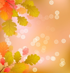 Oak Tree Leaves of Autumn vector image vector image