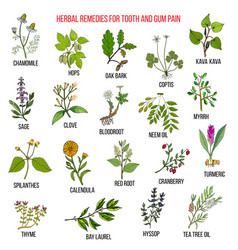 best herbal remedies for tooth and gum pain vector image