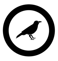 Crow black icon in circle vector