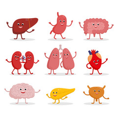 Human organs cartoon characters vector