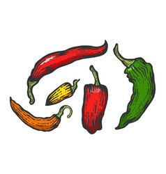 Peppers color sketch engraving vector