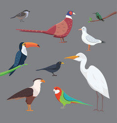 Popular birding species collection vector