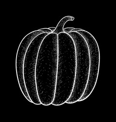 Pumpkin white outline drawing on black background vector