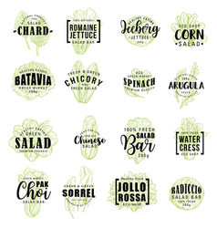 salads vegetable icons lettering vector image