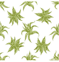 Seamless pattern with hand drawn pastel aloe vector
