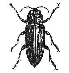 Wood boring beetle vintage vector